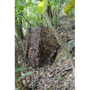 Camo maskuojantis tinklas ruduo 1.5x5 m